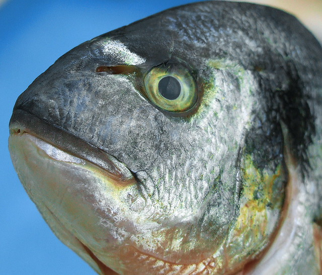 It's Fish Tonight.......it must be Friday!!!