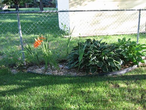Backyard (South Fence) | by pelennor
