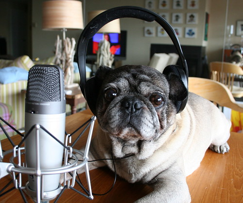 Roscoe Considers Recording a Podcast | by zoomar