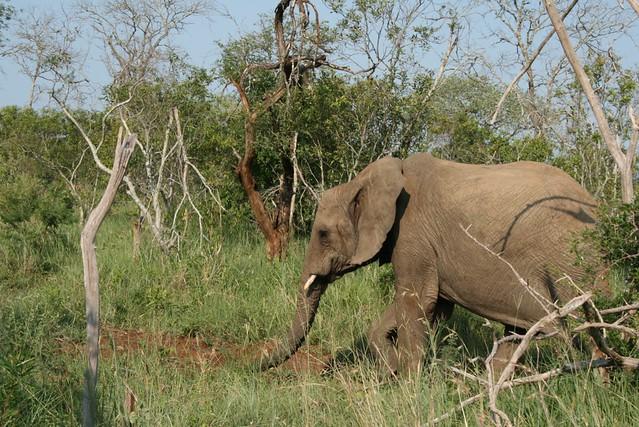 Mkhaya Safari