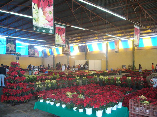 Popocatépetl - Puebla