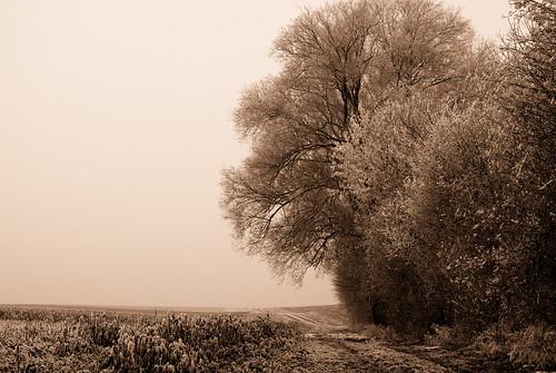 trees winter bw white sw weiß bäume bume