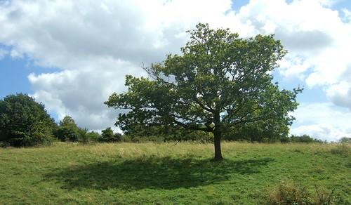 Tree | by foilman