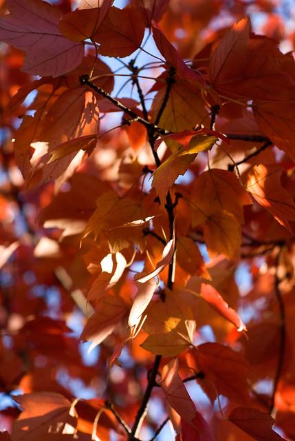 Leaves Exhibit A