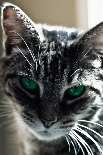 cat photoshop nikon bandit d40 thelittledoglaughed acreestudios