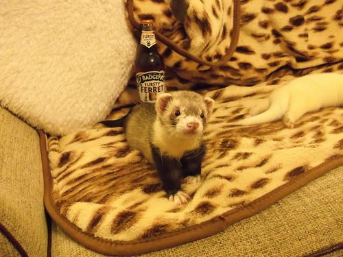 Humbug : a Fursty Ferret