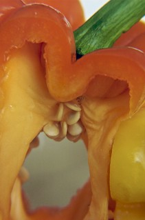 Orange Pepper