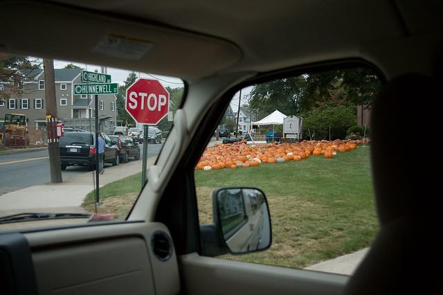 imgp9796 - Pumpkin Patch