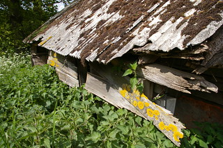 Barn and nettles | by debs-eye