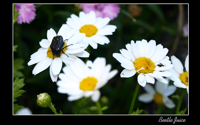 Beetle Juice (Editada)