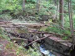 Bruce Trail Georgetown 069