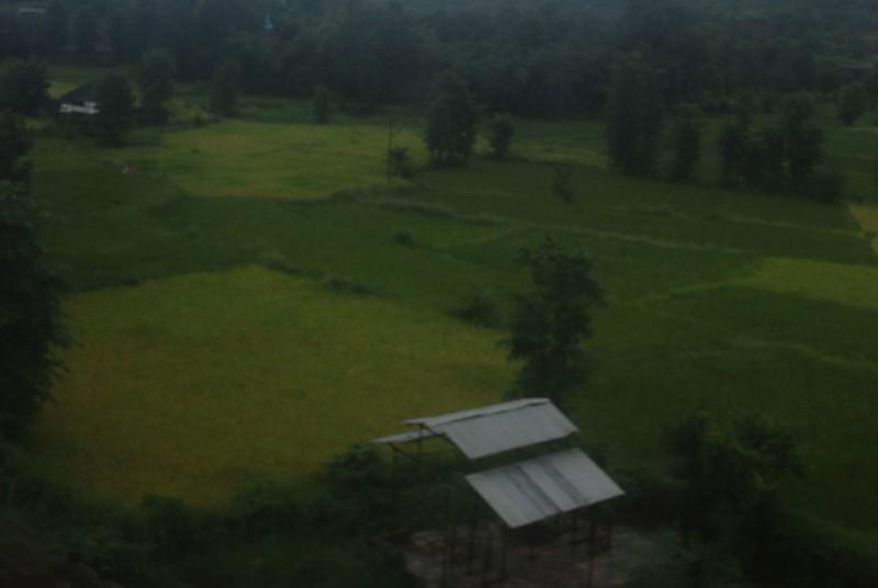 Fields of Konkan