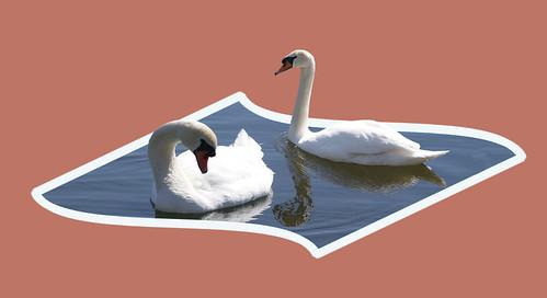Swans Pop-Up