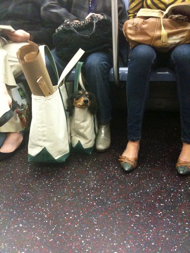 Dog in a Bag
