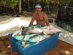 masser af fisk dating site login p id hook up