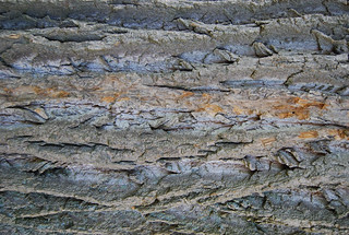 Tree Bark Texture 03 | by SixRevisions