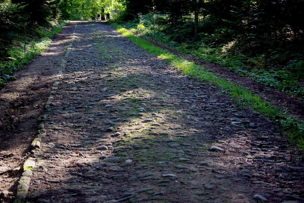 stara droga leśna
