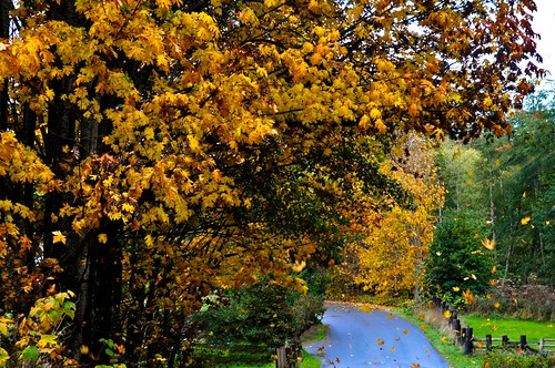 autumn orange green fall rain nikon rust wind portangeles 2009 deadend d300 grayskies getrdun nikkor1755mmf28g cordan flickrgolfclub dmyers