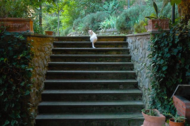 Lilo on the Steps
