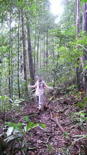 Thu, 03/13/2008 - 08:06 - Dr. Kamariah Abu Salim, Brunei plot leader, in plot. Credit: CTFS