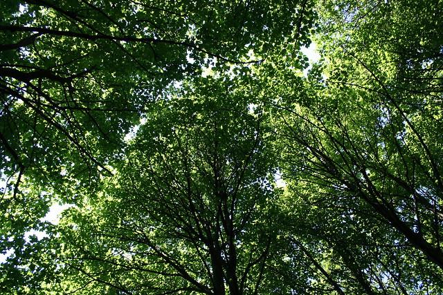 May trees