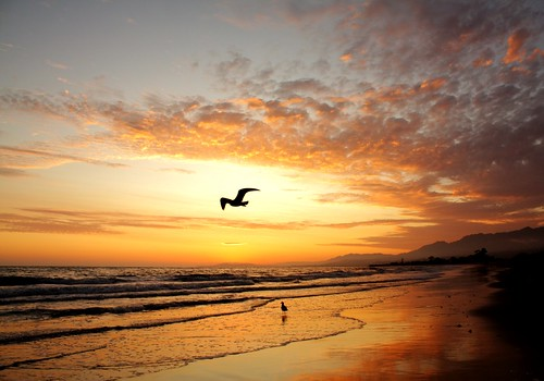ocean california sunset mountain fall beach water clouds sand surf waves pacific seagull flight hills kennelly platinumphoto