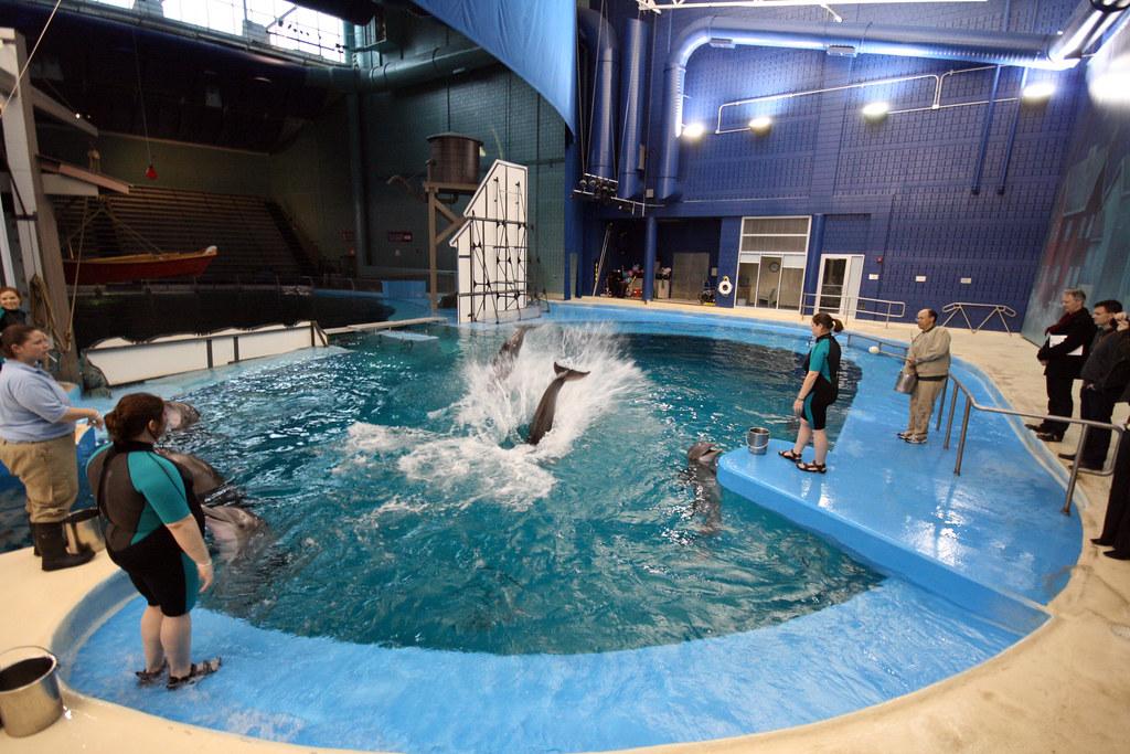 Indianapolis Zoo Aquarium | The Indianapolis Zoo's Marine ...