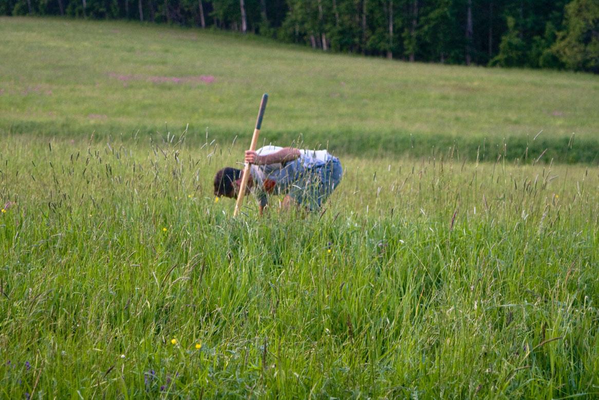 Sat, 06/06/2009 - 8:03am - digging