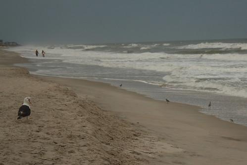 ocean beach nc northcarolina topsailisland carettacaretta northtopsailbeach onslowcounty loggerheadseaturtlenestsitting
