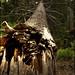 Árbol caído en Acadia