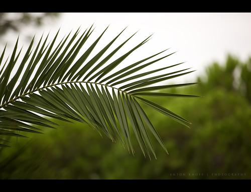 vacation holiday plant green sign canon turkey petals bokeh palm antalya belek antonkhoff
