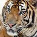 RTW - Tiger Temple, Thailand