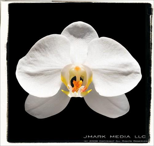 orchid longlostfriend tinymalone jmarkmediallc tokina100mmmacro nikond300 nikonsb900