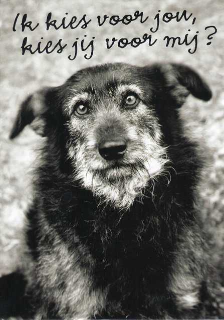 Animal Rights Ad Postcard