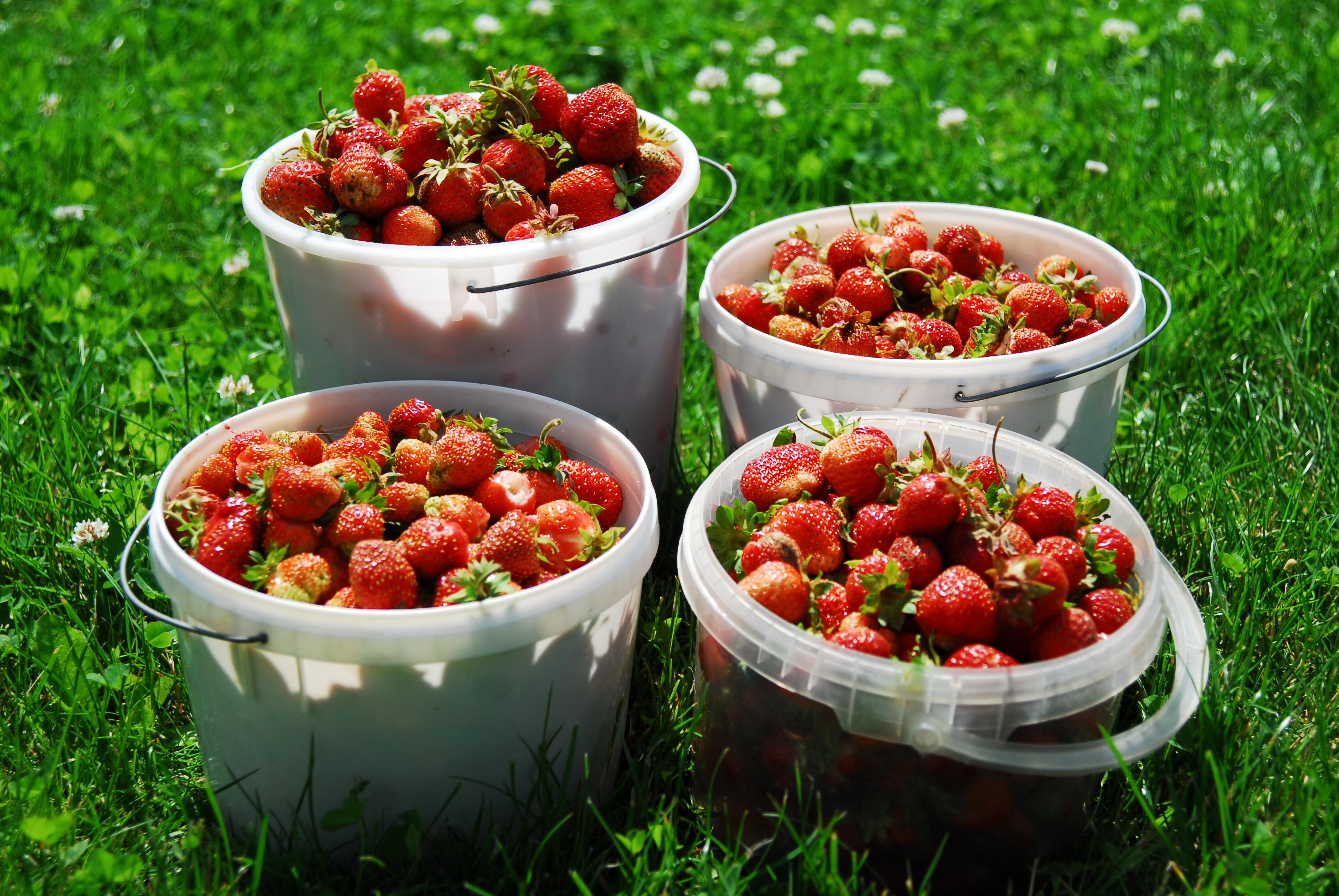 harvest | memorial day gardening | Great Garden Activities You Can Do Over Memorial Day Weekend