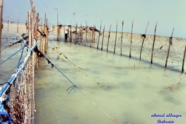 Bahraini fish trap حظائر صيد السمك - البحرين