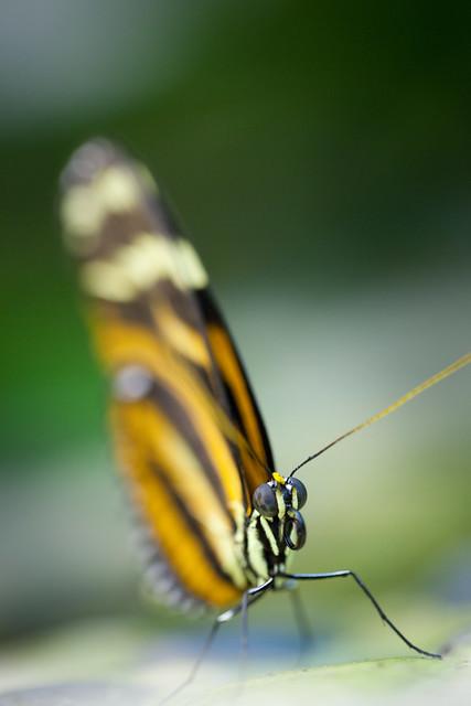 Butterfly Palace 5869
