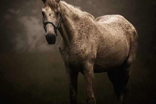 Horse Portrait...Thanks, Explore and Utata!