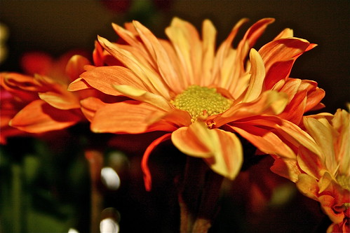 flowers orange green sunrise petals daisy