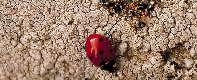 Spots in Red