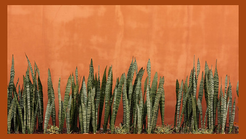 Abstract planting | by Kleinz1