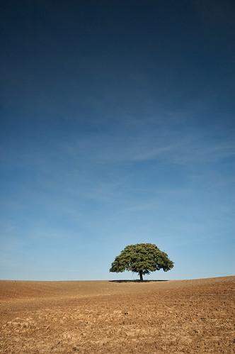 tree field landscape geotagged oak east lonely nottinghamshire bridgford purefinder geo:lon=0966282 forausten geo:lat=52992393