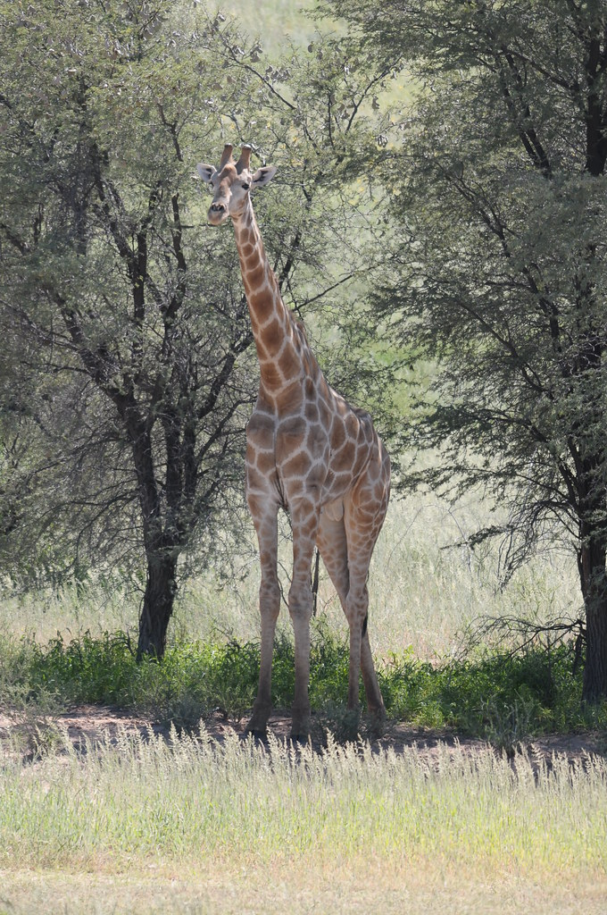 2009-03-19 Kalahara Maa Maas 229
