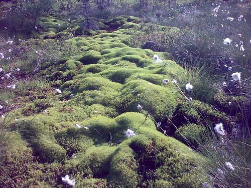 field landscape moss swamp