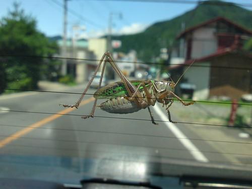 Big bug | by kalleboo