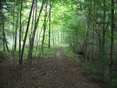 Bruce Trail Georgetown 068