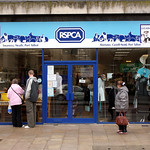 RSPCA Shop - Roy