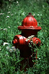 Fire hydrant in pasture   by Elizabeth Buie
