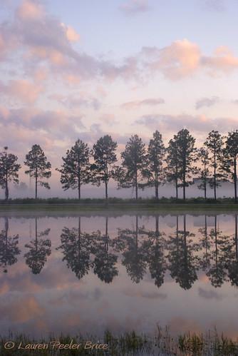 pink seascape water weather fog gardens sunrise wonder landscape pond day purple stillness daybreak conifer yahoonews groundfog laurieb nikond80 dpca stjohnscountyagriculturalcentermastergardens floridasbridingandphotofest radiationgroundfog lbricephoto dailynaturetnc10 photocontesttnc10