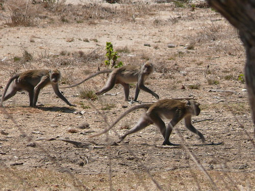 Long-tailed macaques | by East Asia & Pacific on the rise - Blog
